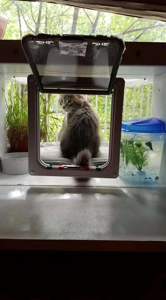 Cat Solarium, Catio, Cat Patio, Cat Balcony