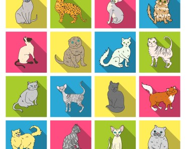 different breeds of cats