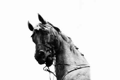 stone_stallion