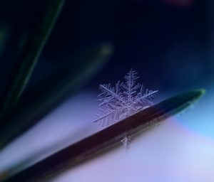 dendrite ferning snow crystal snowflake formation ice