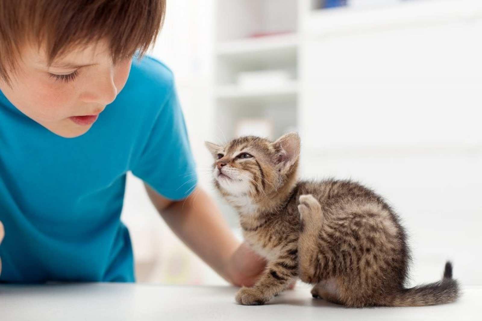 Cat Diseases Fleas