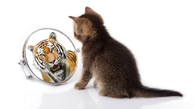 Kitten looking at reflection as a tiger