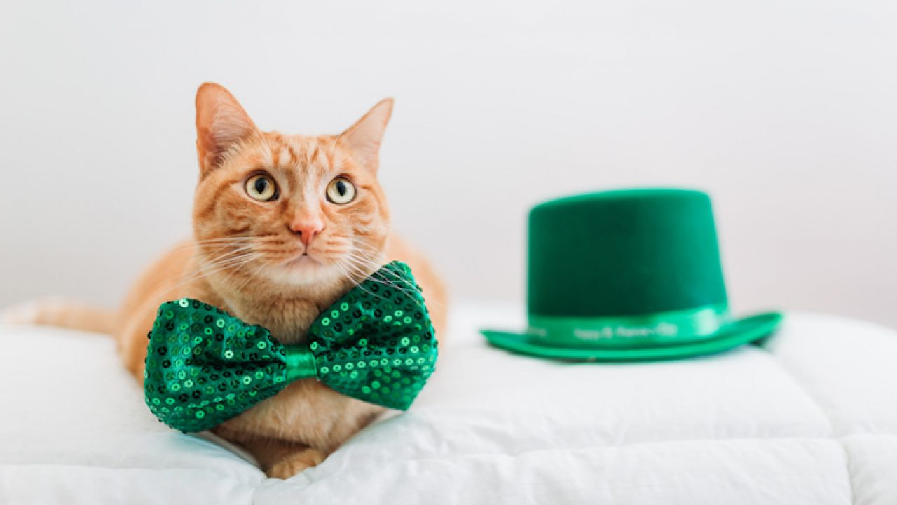 Saint Patrick S Day 5 Cat Themed Gifts To Show Off Your Irish Side Cattime