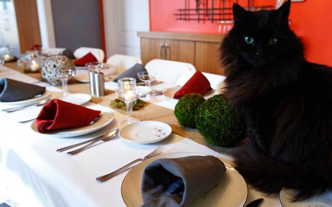 Black cat sits on elegantly set dining table ready warning us to avoid cat toxic holiday foods.
