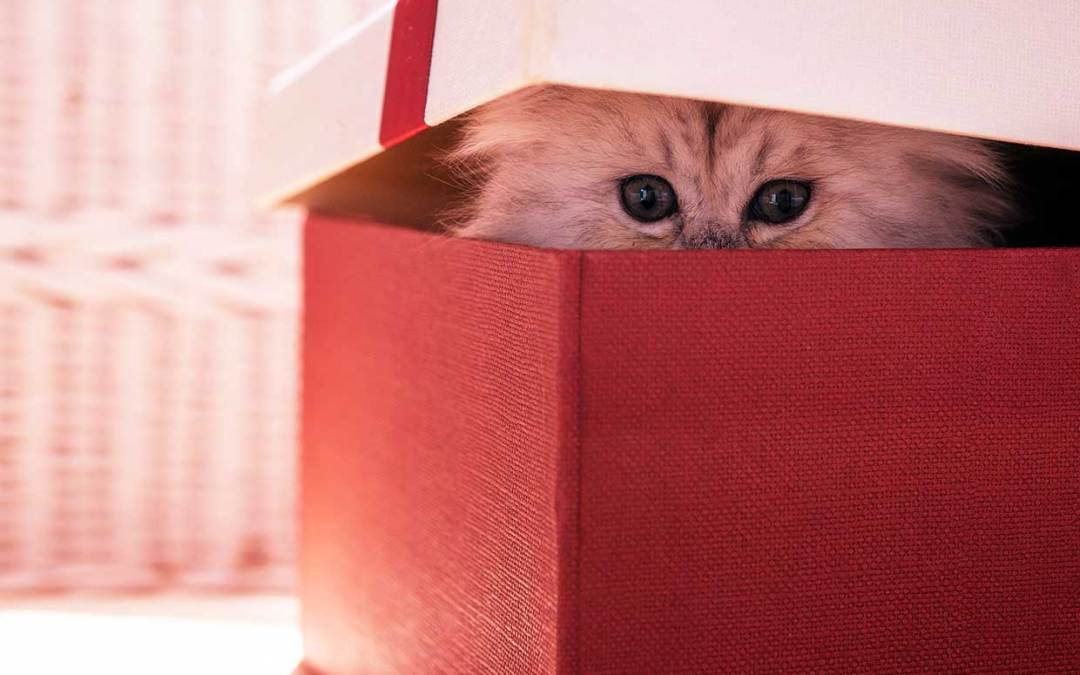Best Gifts for Cats — and Cat People