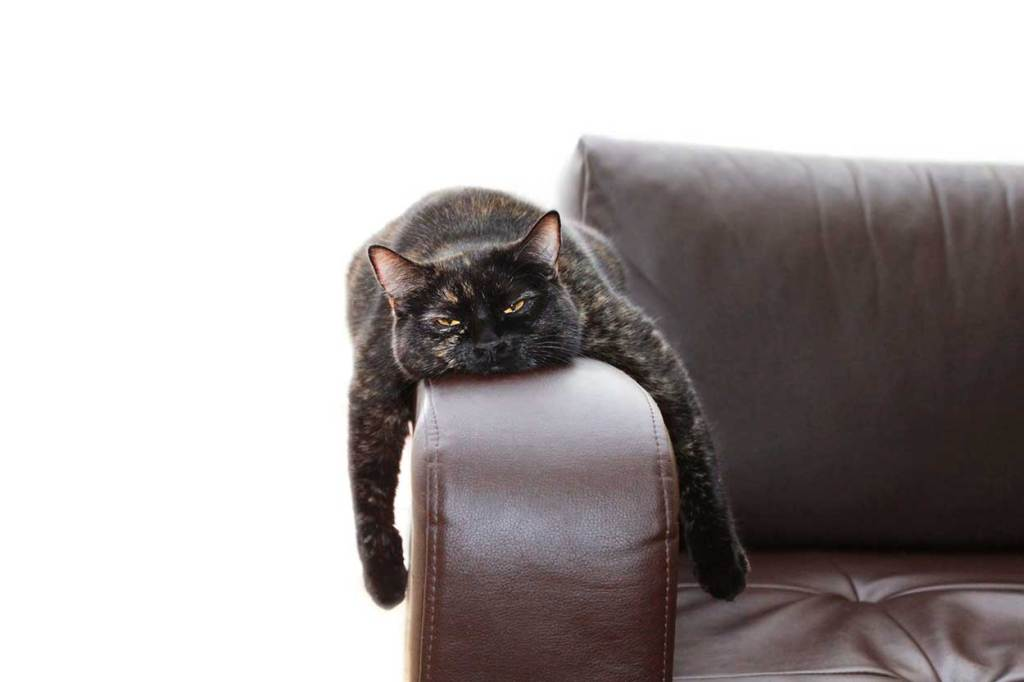 Large black cat stretched out on sofa arm rest , paws hanging on either side like monorail cat