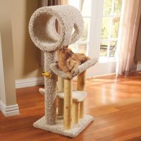Cat Scratching Tree Furniture (A BUYERS GUIDE) | Cat Tree ...
