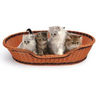 PE Rattan Dog Cat Bed Basket Extra Large | LOWEST PRICES ...