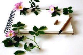 notebook-3397135__340