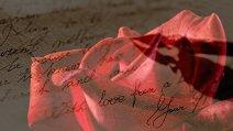 rose-1894760__340