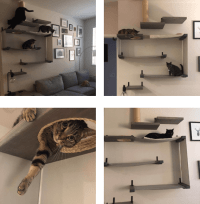 Wall Mounted Stairs for Cats: Behind The Scenes Of A ...