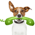 dog-calling-catwalk-canines2