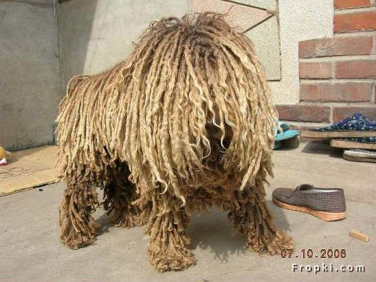 rope_dog_fropki3