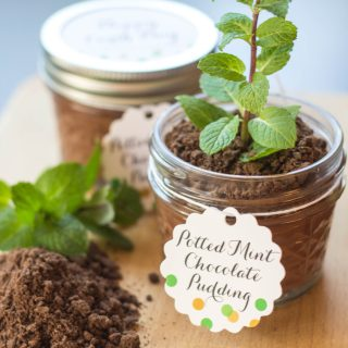 Potted Mint Chocolate Pudding