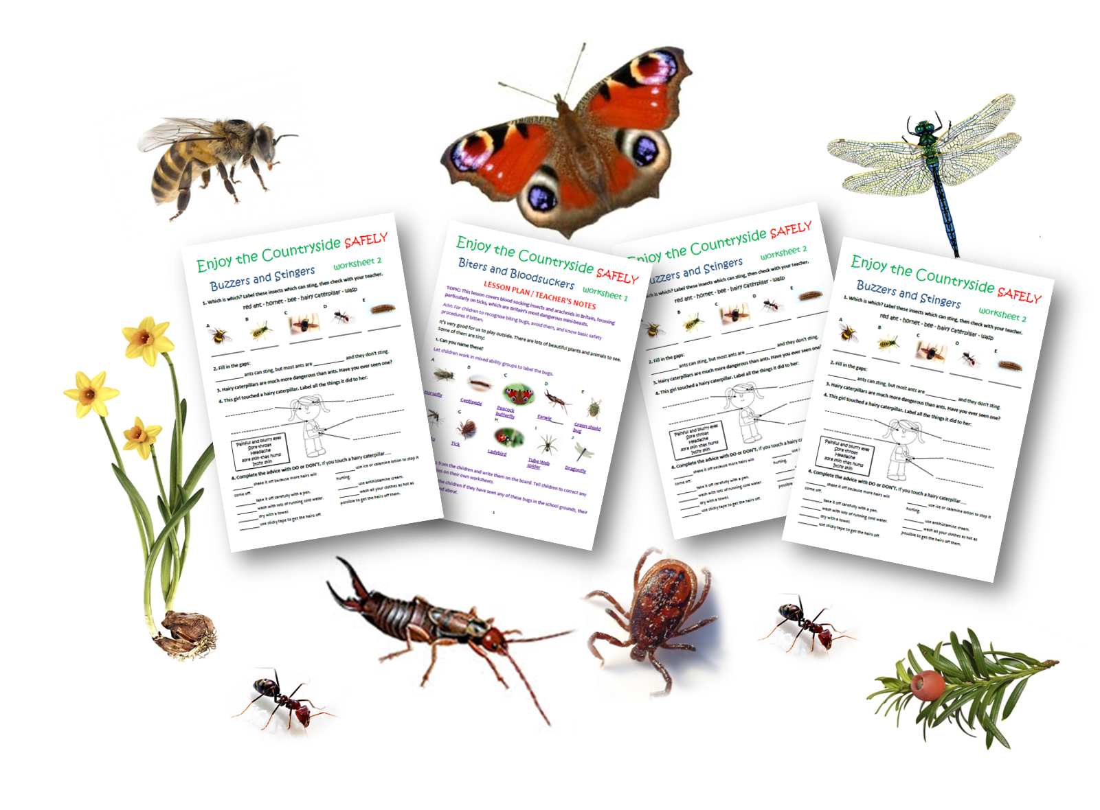 Primary School Teaching Resources Mini Beasts Caudwell