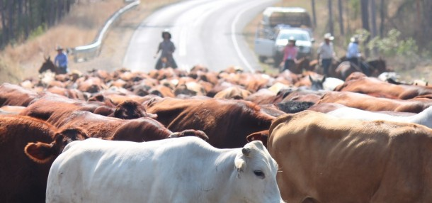 Video : In search of greener pastures | Musvo Zimbabwe