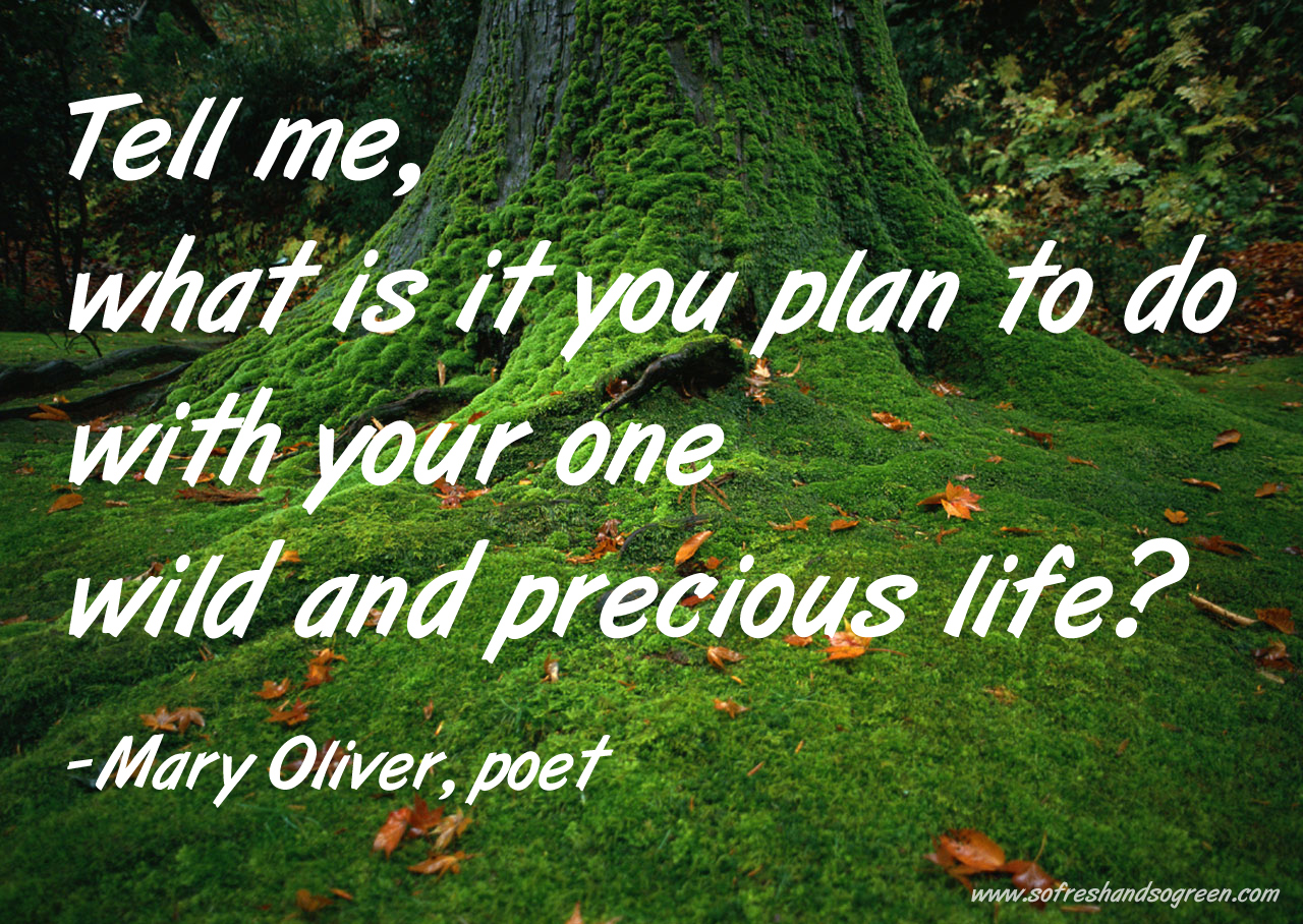 Join Us For The Solstice Healing Event On Thursday, 21 December! Mary-oliver-quote-www-sofreshandsogreen-com
