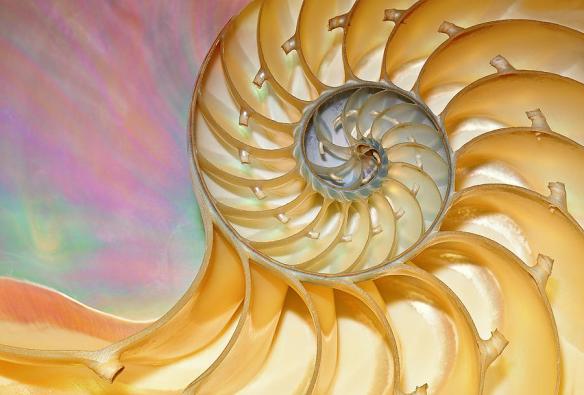 nautilus-shell-dean-pennala