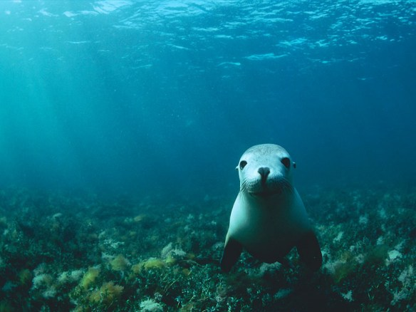 Image from oceanmedia.su