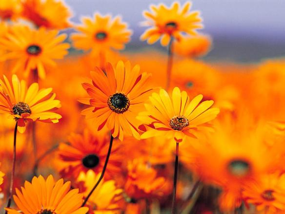 Image from www.pixoto.com
