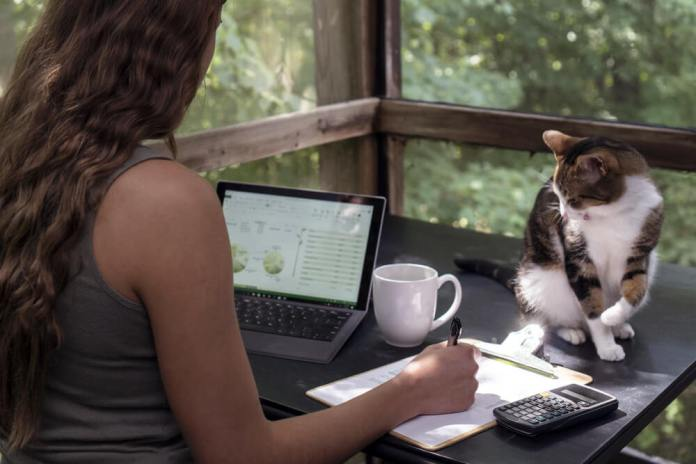 Pet Blogs Write for us