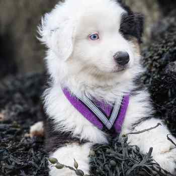 Puppy Classes and Packages