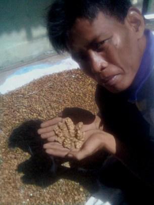 Kopi Luak Farmer