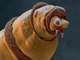 Maggot closeup.