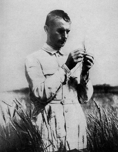 Lysenko in field with wheat