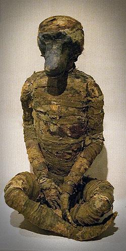 mummy mummified baboon