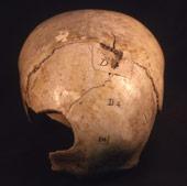briton-skull