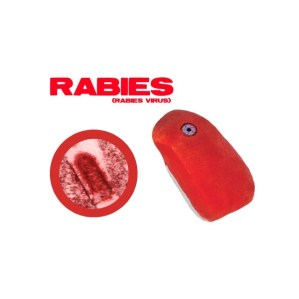 rabies-virus