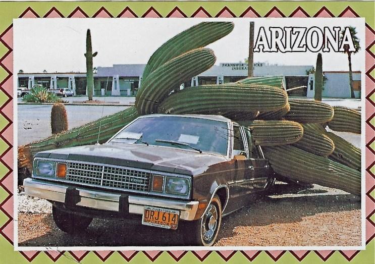 cactus-