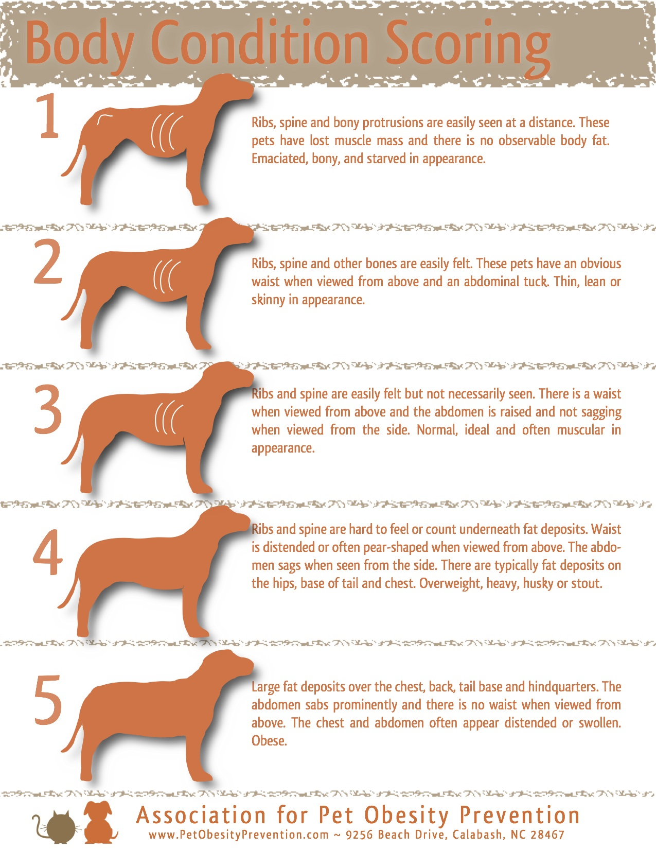 hight resolution of 5 point dog body condition scoring chart