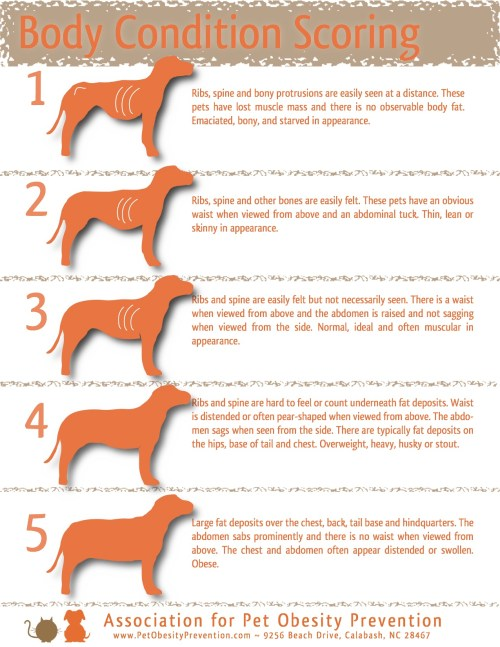 small resolution of 5 point dog body condition scoring chart