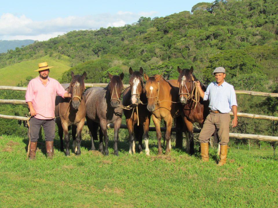 Cavalo Crioulo na nova novela das seis