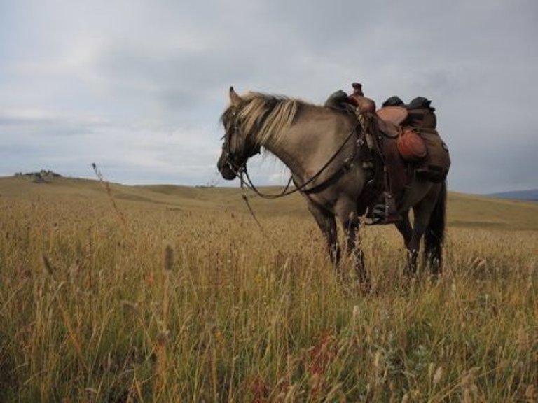 Os cavalos e sua incrível memória
