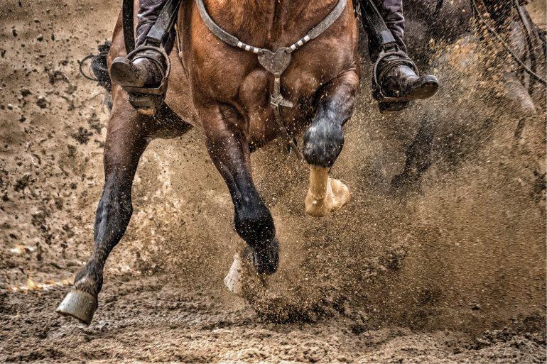 Crioulaço do Cavalo Crioulo - Imagem: Felipe Ulbrich