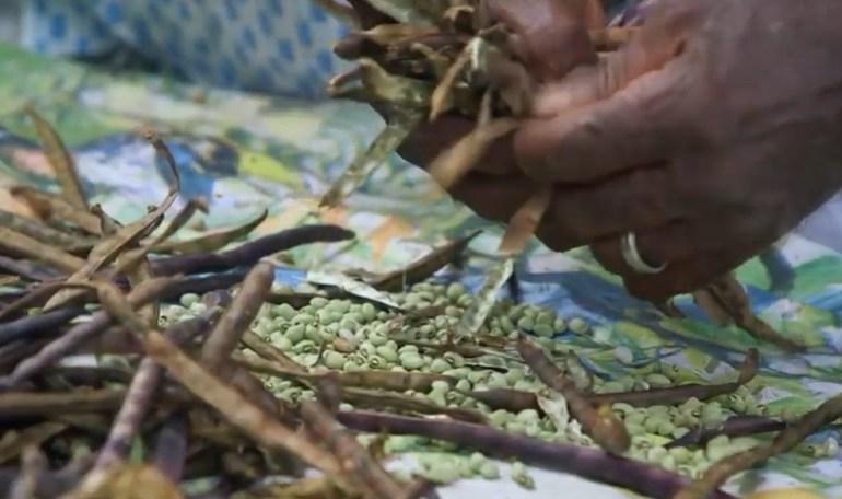 'Seguindo a Comida' estreia no Brasil