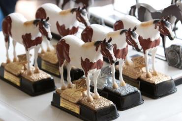 Pelagem exótica do Paint Horse promete encantar na Nacional e Potro do Futuro