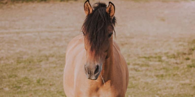 5 coisas que seu cavalo não gosta