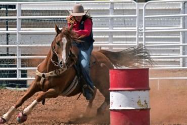 Os cavalos sempre sinalizam quando algo não vai bem