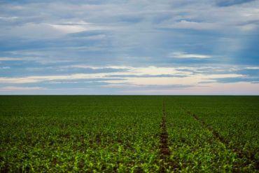 Valor do Agro do Brasil avança 2,1% em 2019