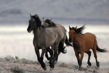 Os Cavalos Rurais
