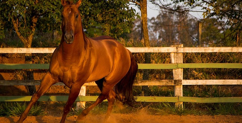 Como os cavalos enxergam e porque você precisa saber disso