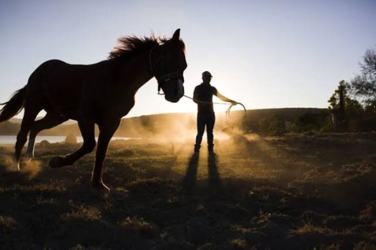 Por que seu cavalo não faz o que você quer