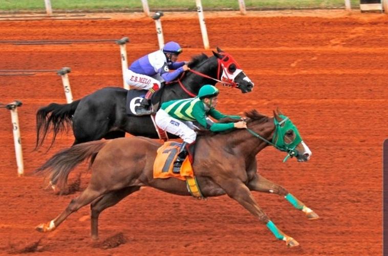 Dois cavalos brasileiros premiados no 2019 AQHA Racing Champions