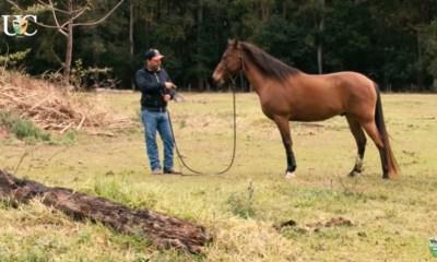 Exercícios de chão que são úteis para o seu cavalo de cavalgada