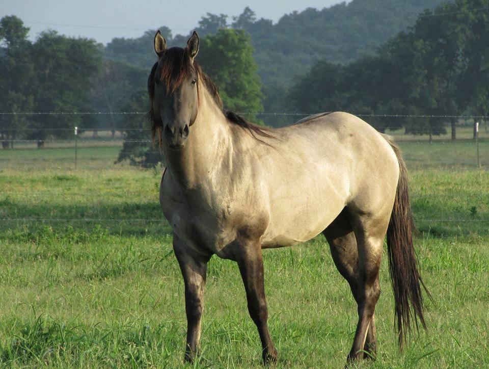As vitaminas são pequenas, porém de grande importância para os cavalos