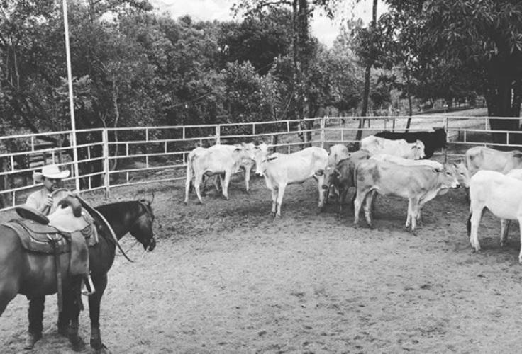 Ranch Sorting For Friends anuncia calendário 2020